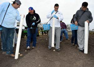 TSTC Potato Planting